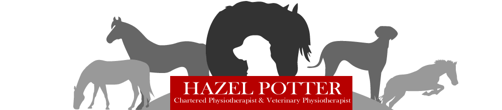 The Vet Physio